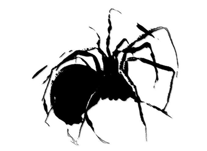 spider_678x494