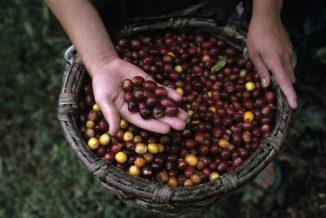 Lavazza prosegue l'attività di formazione sul mondo del caffè per gli studenti dell'Università di Pollenzo