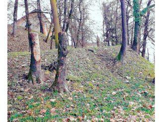 Gli alberi del parco del castello di Govone non andavano abbattuti!
