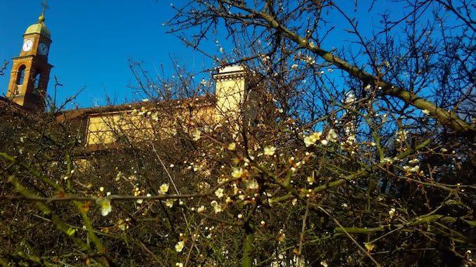 Bra: continua la fioritura del pruneto del santuario