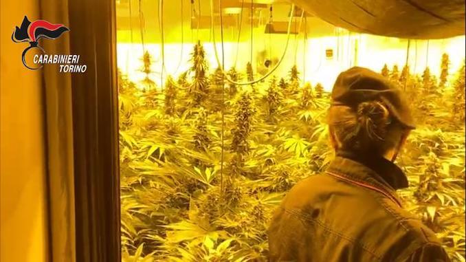 I Carabinieri sequestrano un casolare trasformato in serra per la cannabis