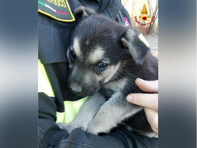 Vigili del fuoco Torino – soccorso cuccioli