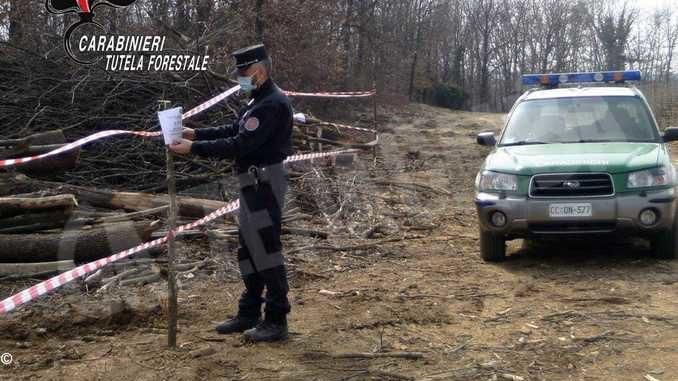Imprenditore roerino tagliava querce nel Bosco delle Sorti a Bruno