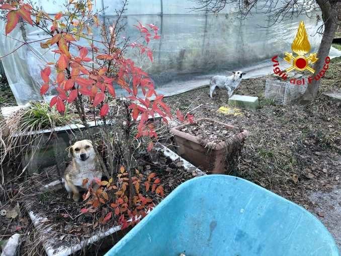 Un incendio distrugge cascina a Chiusa Pesio: salvati i residenti e i cani 1