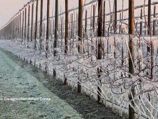 Cia Cuneo: l'ondata di gelo è passata senza gravi danni