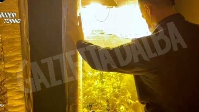 Faceva la spola fra Beinasco e Viarigi per gestire una serra di cannabis