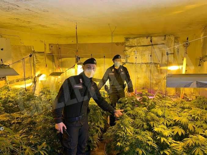 Coltivavano marijuana in un casale abbandonato a Portacomaro: arrestati