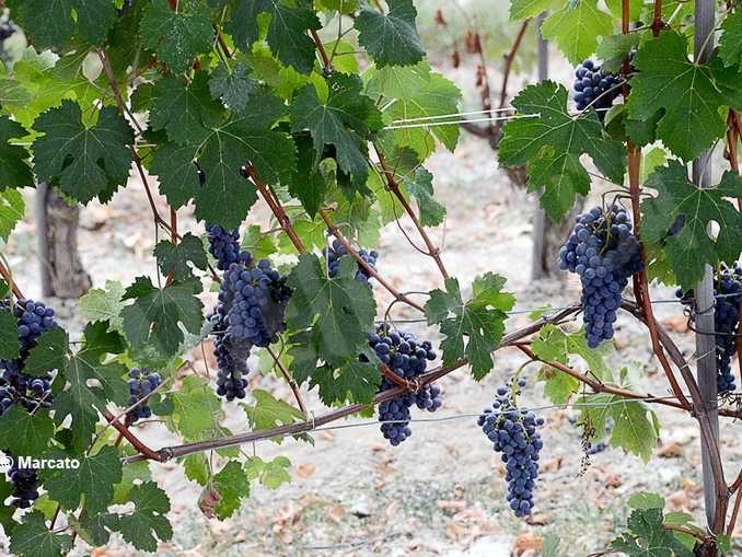 Per il vino non diamo la colpa alla pandemia: abbiamo perso il senso della misura e del limite
