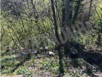 Rifiuti abbandonati a Murazzano: individuati i responsabili 2