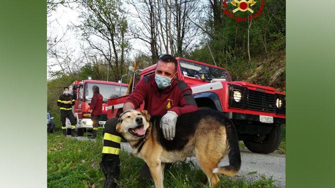 I Vigili del fuoco mettono in salvo cane di grossa taglia bloccato su un albero a 10 metri d'altezza