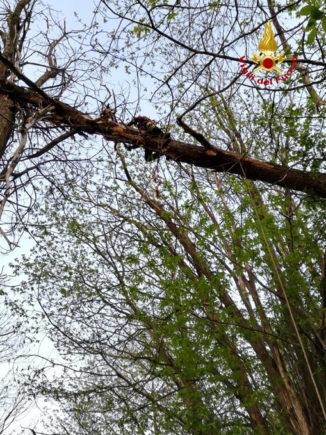 I Vigili del fuoco mettono in salvo cane di grossa taglia bloccato su un albero a 10 metri d'altezza 2