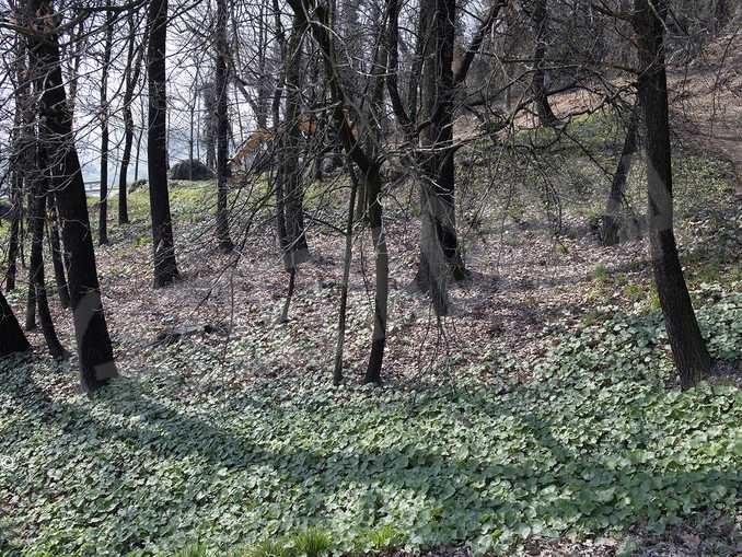Il bosco e le idee per recuperare delle aree incolte