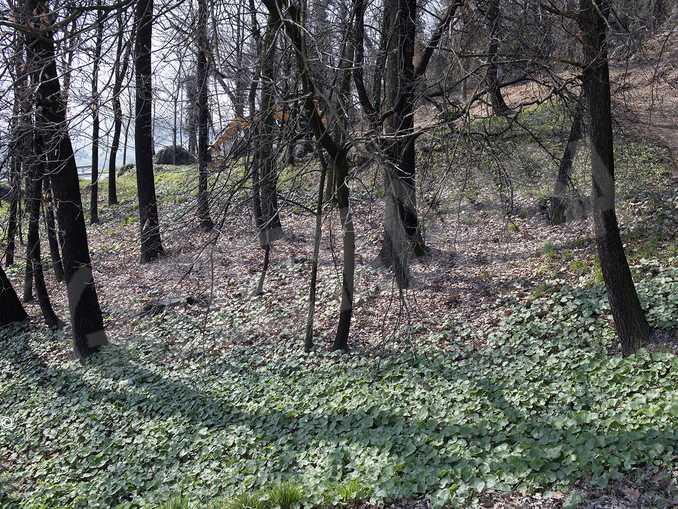 bosco foto1