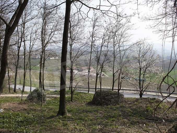 Il bosco e le idee per recuperare delle aree incolte 1