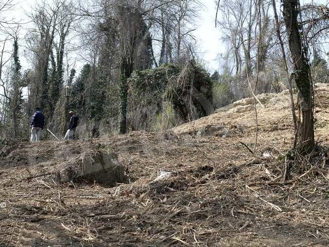 Il bosco e le idee per recuperare delle aree incolte 2