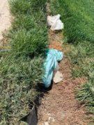 Nelle campagne tra Bra e Pollenzo buche e rifiuti la fanno da padroni 24