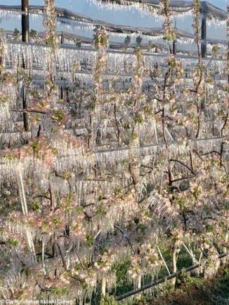 L'ondata di gelo causa gravi danni gravi a frutta, vite e nocciolo