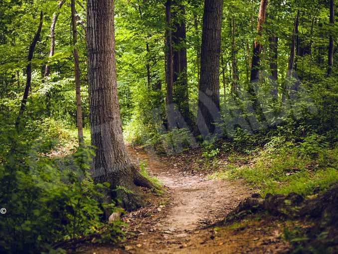 sentiero bosco trekking