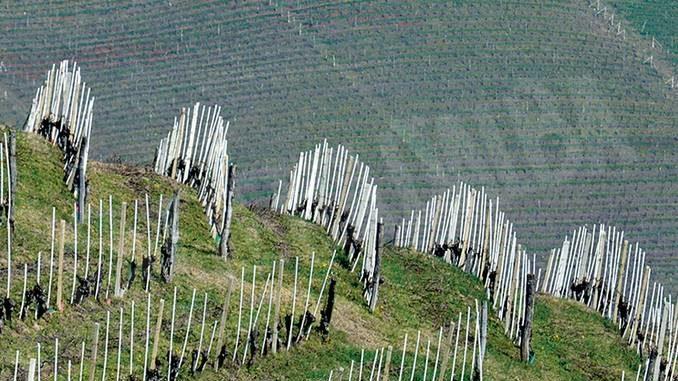 Paesaggi vitivinicoli Unesco: il Comune di Montà entra nell'associazione