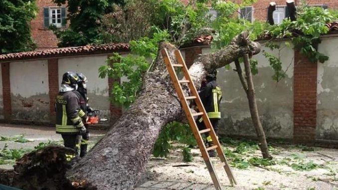 Sommariva Bosco: rimosso l'albero caduto nel viale vicino alla casa di riposo
