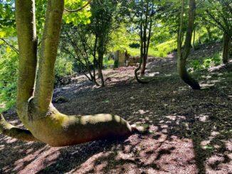 L'idioma dei langhetti nel boschetto degli alberi sedutidi Bosia 1