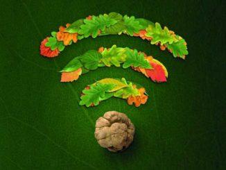 Svolta verde per la Fiera del tartufo guardando a tutela ambientale, cambiamento climatico e sostenibilità 1