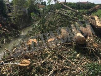 «Lungo il rio Laggera a Pollenzo distrutto il sottobosco». L'assessore Messa: «Intervento necessario per prevenire il rischio idrogeologico»