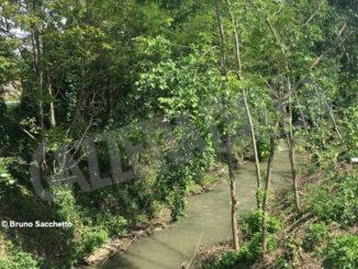 «Lungo il rio Laggera a Pollenzo distrutto il sottobosco». L'assessore Messa: «Intervento necessario per prevenire il rischio idrogeologico» 1