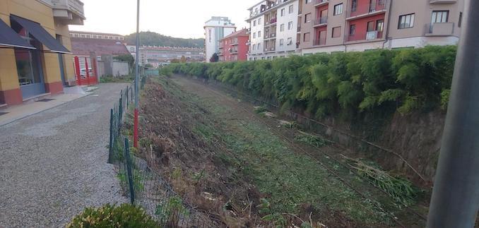 Alba: obbligo di taglio degli alberi di altezza superiore a quattro metri per i proprietari dei terreni in prossimità dei binari lungo la tratta ferroviaria Alba-Castagnole delle Lanze