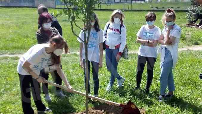 Gli studenti della Macrino piantano 20 alberi da frutto nel parco di San Cassiano 1