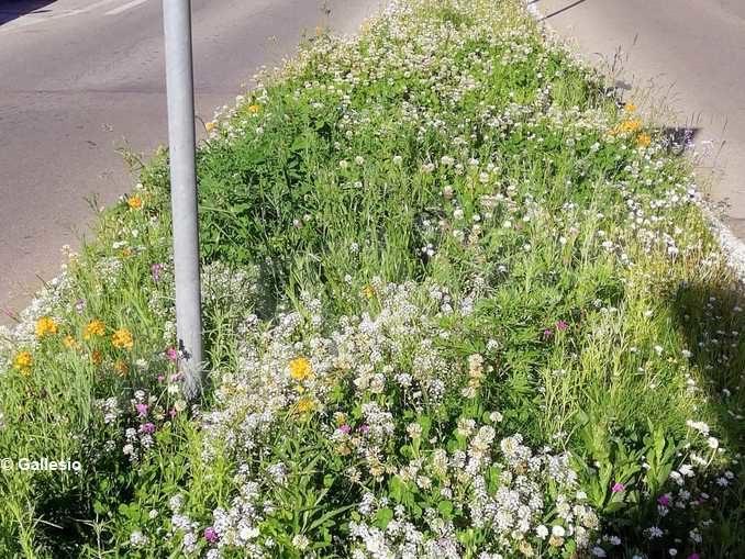 Nuova gara per il verde di giardini e aiuole albesi