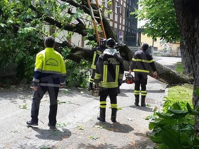 Sommariva Bosco: rimosso l'albero caduto nel viale vicino alla casa di riposo 1