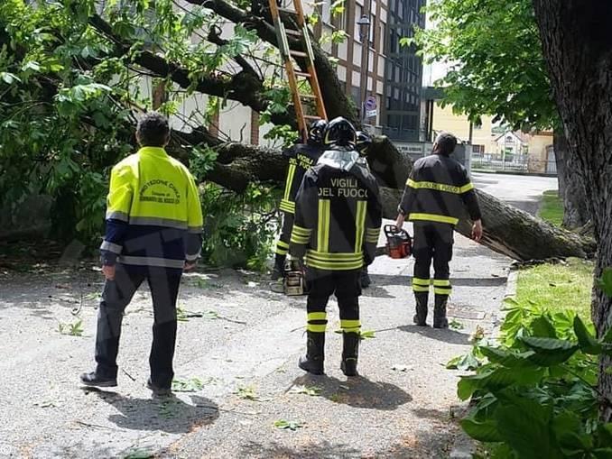 albero abbattuto sommariva bosco 2