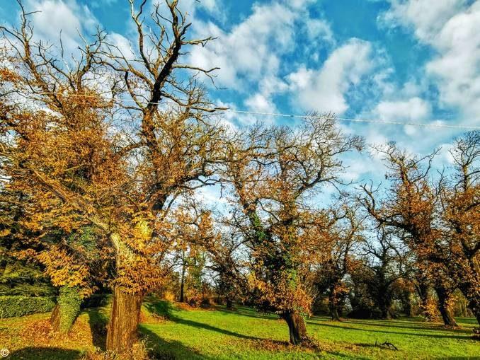 Canale ecologia compra 60mila metri di bosco per difendere i castagni 3