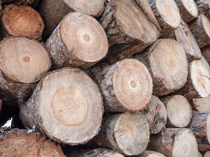 Nasce il Cluster legno Cuneo: presentazione domani al palaAlba