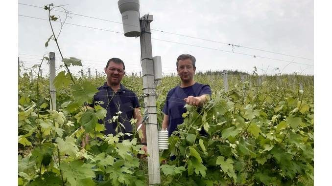 A Canale i sensori meteo aiutano il lavoro tra i filari