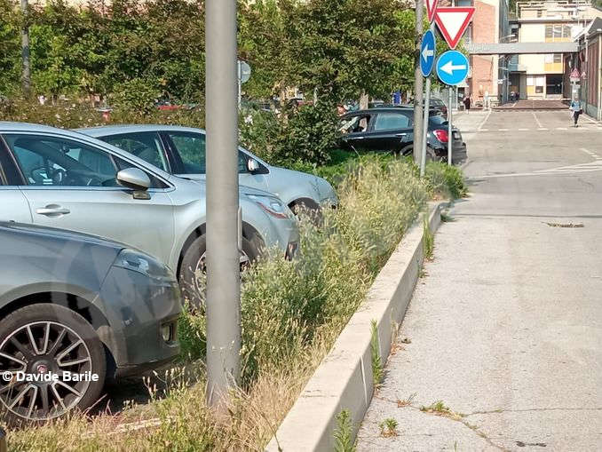 Erba parcheggio4