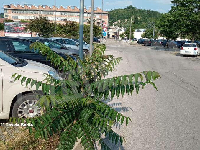 Erba parcheggio6