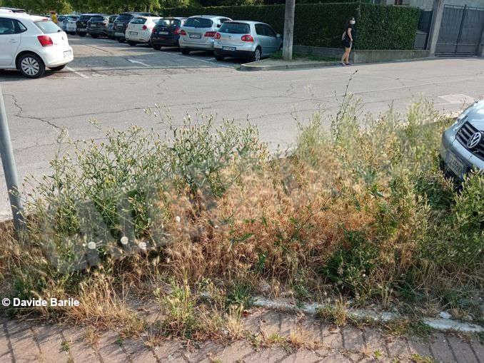 Erba parcheggio8