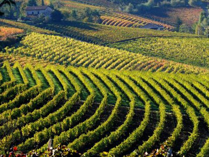 """""""Terre Alfieri"""" cresce, in quattro anni +59% bottiglie"""