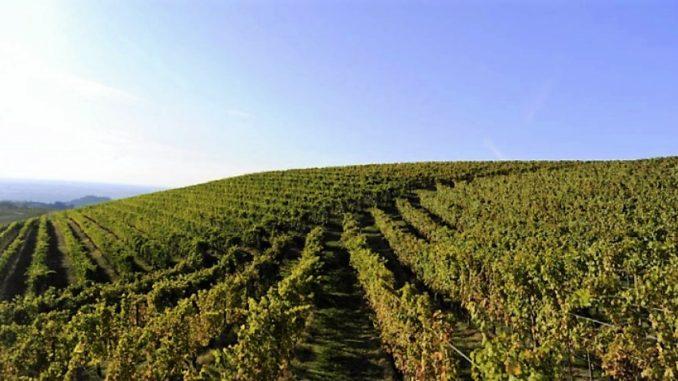 Cantine Coppo, la prestigiosa storica azienda vitivinicola di Canelli, da oggi entra a far parte del Gruppo Dosio