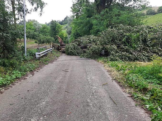 albero caduto a San Rocco Seno d'Elvio