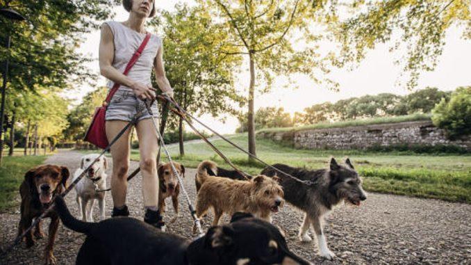Dog sitter diventa professione, il Consiglio regionale del Piemonte approva la legge