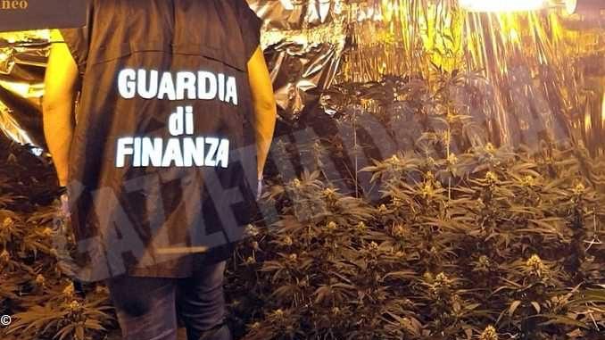 Sequestrata dalla Finanza una serra hi-tech per la marijuana