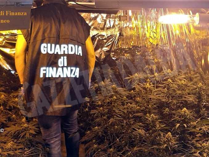 Marijuana Savigliano