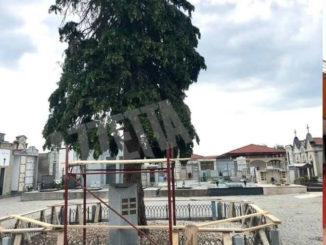 Il cimitero di Farigliano domani resterà chiuso per permettere l'abbattimento di alcuni pini