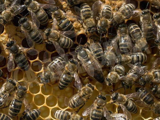 api-alveare-miele