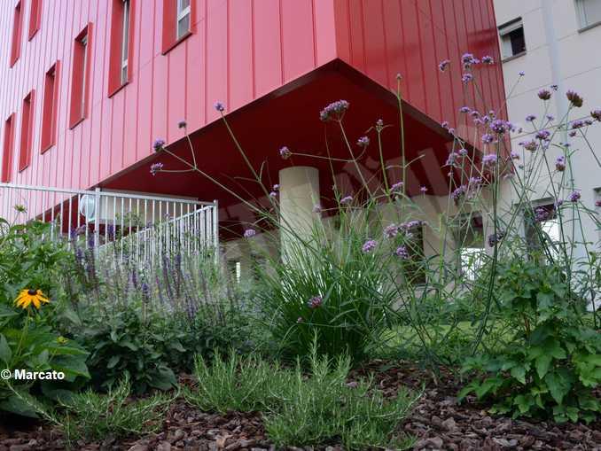 Un anno di vita per l'ospedale nuovo: debuttano i giardini terapeutici 3