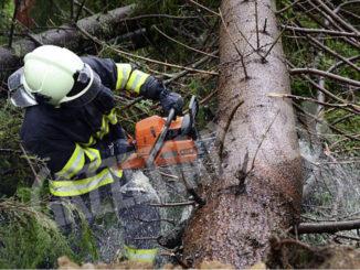 Crollo di alberi a Verduno e a Sommariva del Bosco a causa del maltempo