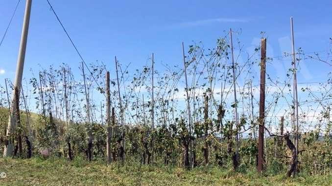 A Castellinaldo si tentano le prime stime dei danni dopo il nubifragio
